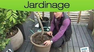 Astuces Jardin : Entretenir Ses Plantes En Pot