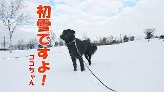 初雪が積もってココちゃんが喜んで走り回っているのに、ティアラ姉さん...