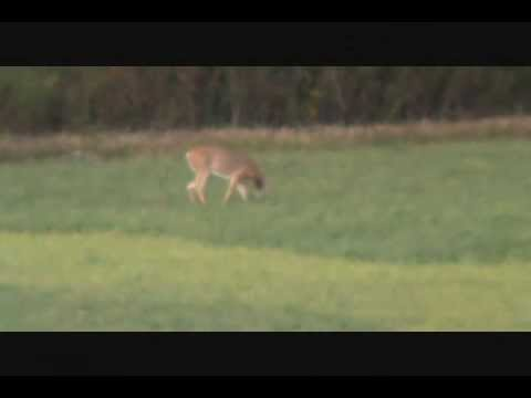 Deer hunt 5 Ruger VT  243 win 450 yrds 95 gr  berger VLD