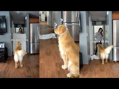 What the Fluff Challenge With My Golden Retriever