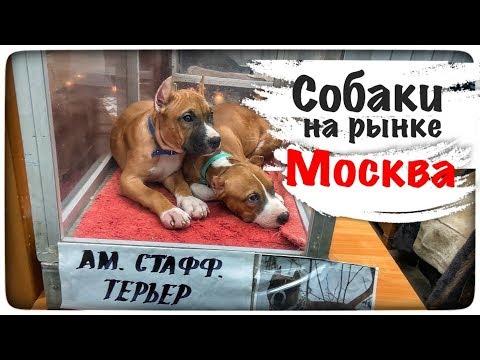 Продажа собак на птичьем рынке Садовод в Москве