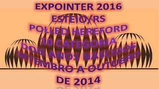 EXPOINTER 2016. POLLED HEREFORD 10 CATEGORIA DOIS ANOS