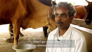 Reliance Foundation: RF IS - Krishnan – Livestock farmer – Pudukkottai – Tamil Nadu