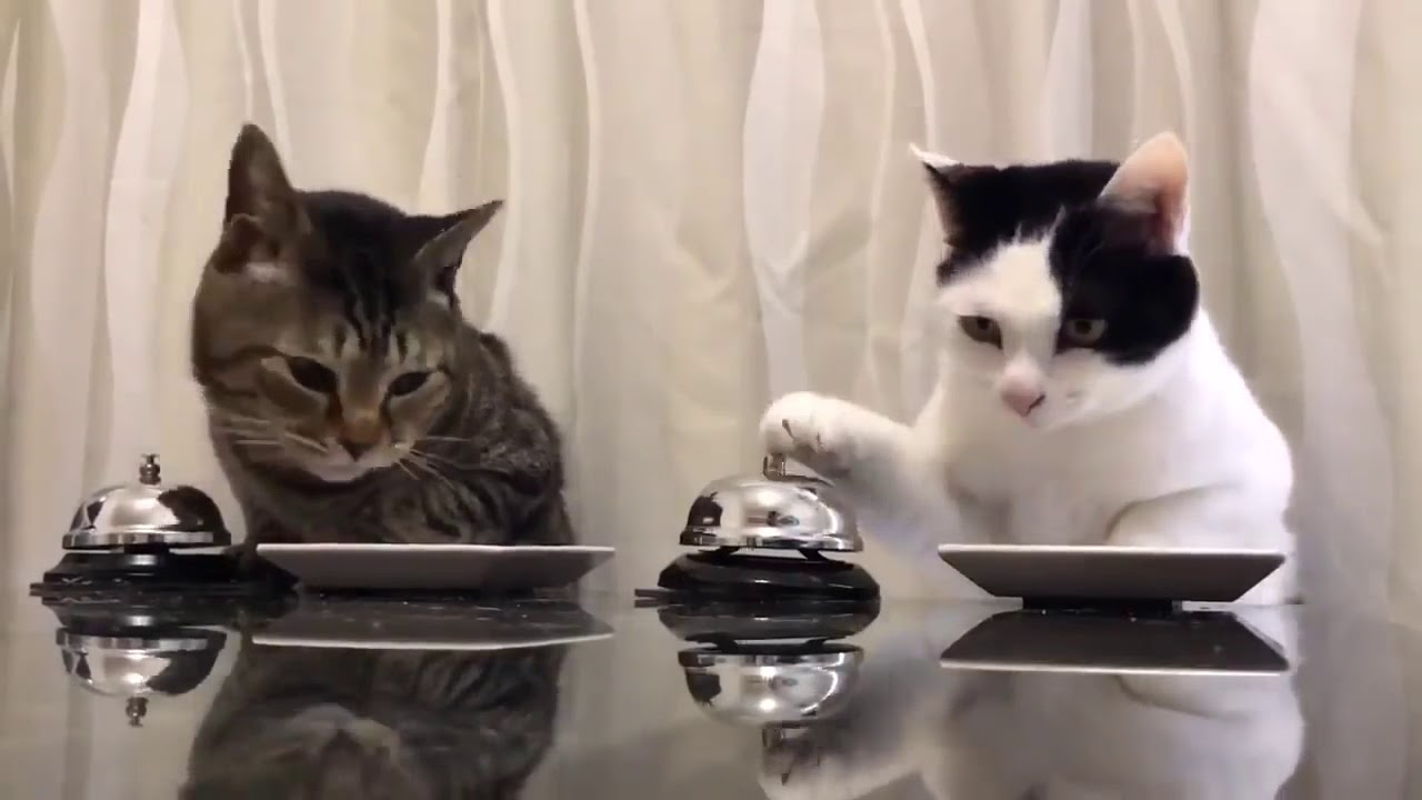 Cats Ringing Bell For Food Youtube