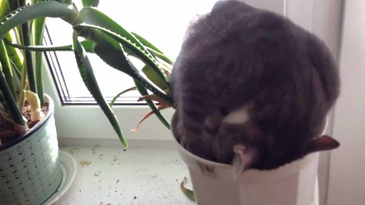 Parrot Flower Pot