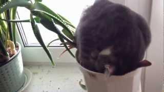 Cat sleeping in a flower pot