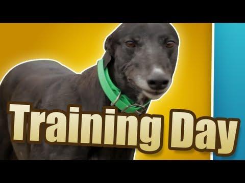 TRAINING DAY - Greyhounds: The Dogumentary (Episode 2)