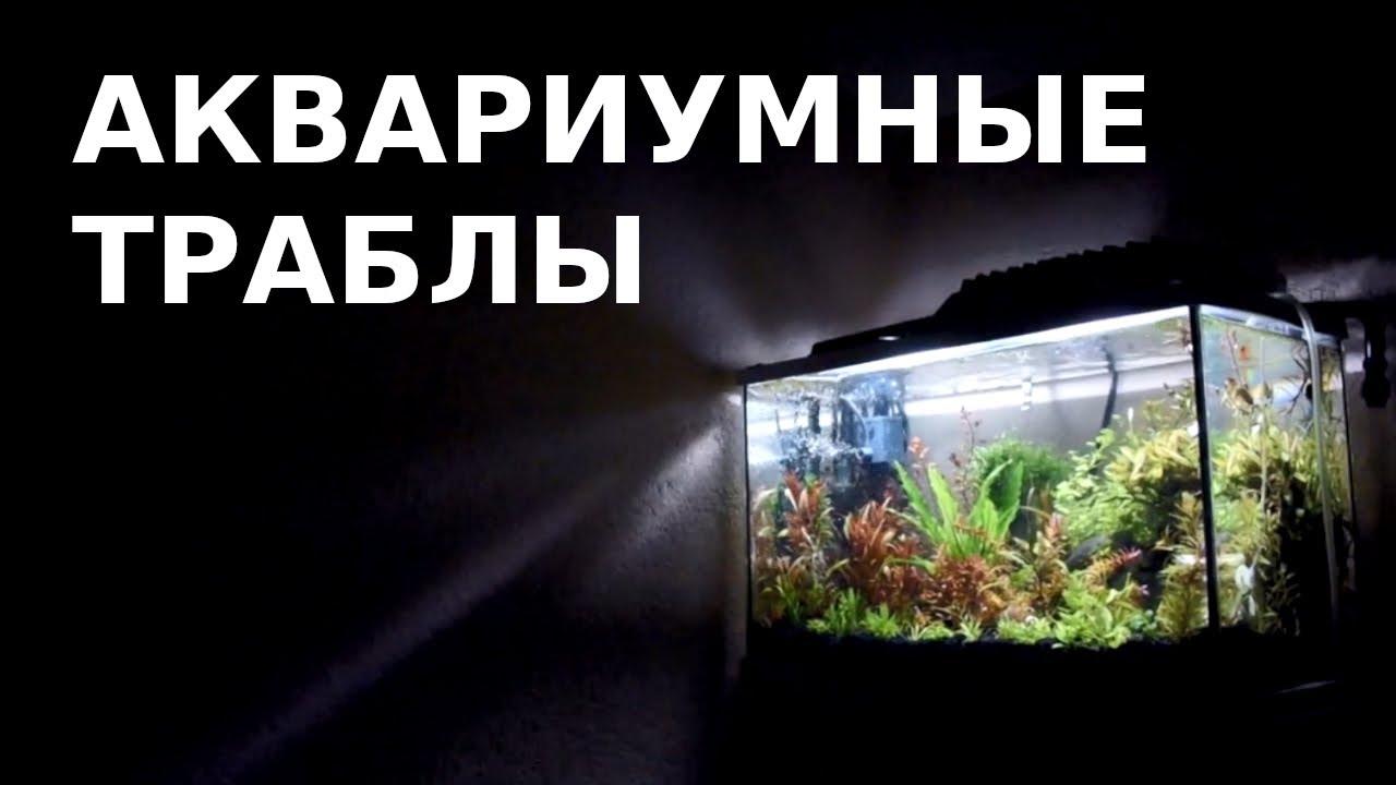 Проблемы после запуска аквариума и пути их решения: муть, слизь, налет