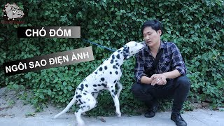 [DOG REVIEW] Chó DALMATIAN - Chó Đốm - Ngôi sao điện ảnh / Hùng Chó Channel