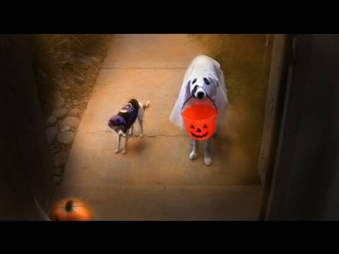 Trick or Treat? – Funny Dogs Halloween Dog Tricks