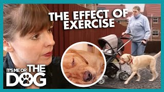 The Effect Exercise Has On A Dog's Behaviour