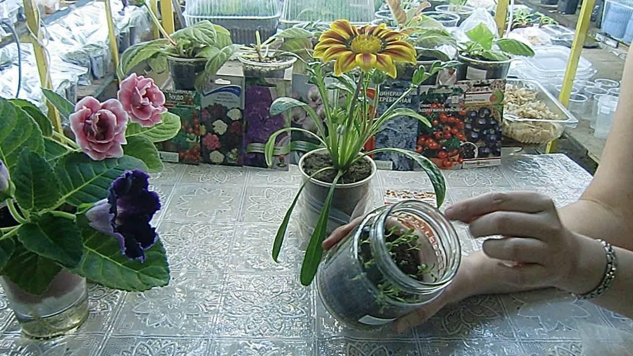 Купить профсемена цветов по лучшей цене в киеве (украине) в каталоге интернет-магазина семян sempochta семена почтой. Широкий выбор семян.