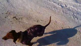Ездовая собака, чукча и отщепенец. :-))