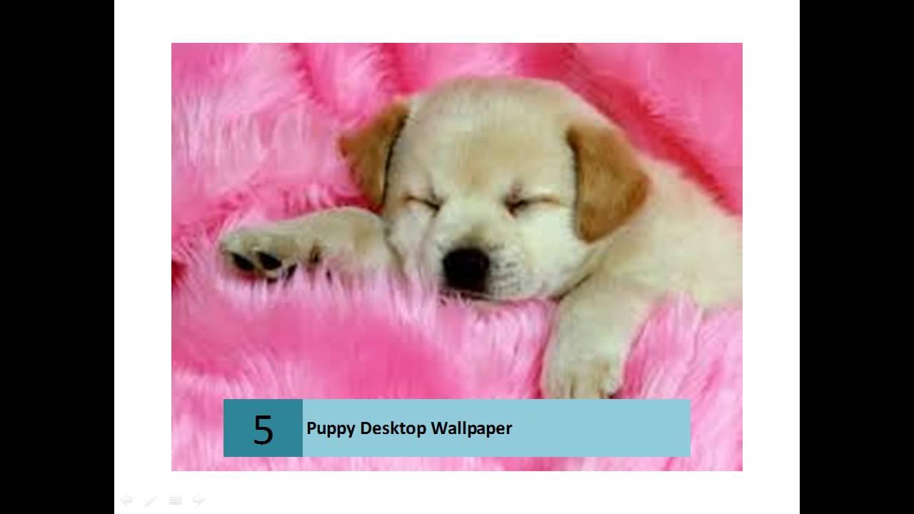 cute puppies hd desktop wallpapers - youtube