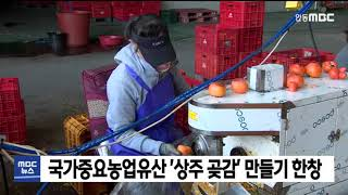 국가중요농업유산 '상주 전통곶감' 만들기…