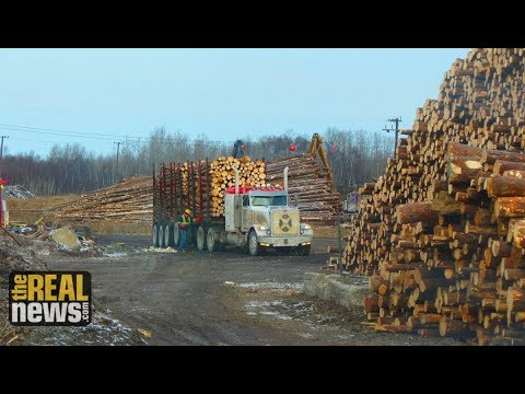 Canadian Logger Intensifies Persecution of Greenpeace and Stand.Earth