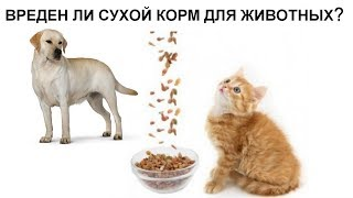 Из чего делают сухой корм для животных