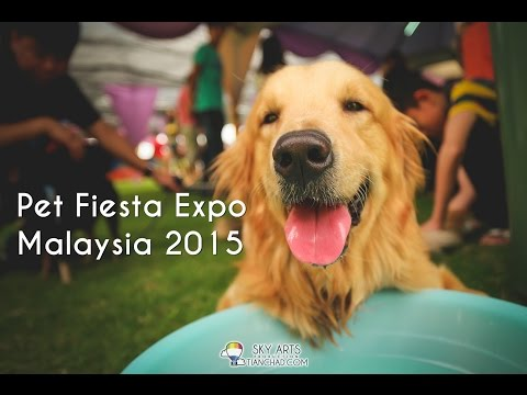 Cute Animals at Pet Fiesta Expo Malaysia 2015 Setia City Convention Centre
