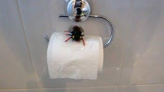 صرصار كبير في الحمام!؟