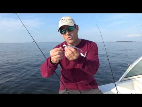 Fall Topwater Fishing in Eastern Bay with Chris Dollar