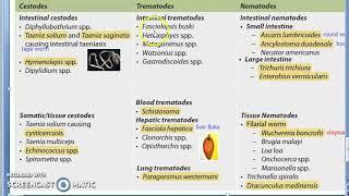 Helmint nema nemada trematode cestode, A Giardiasis Lamblia életciklusa