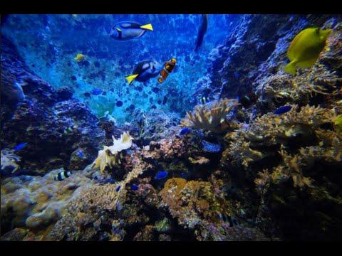 Deep Ocean Documentary - Documentary Films