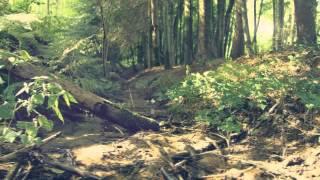 Spring Chord - Sound Quelle