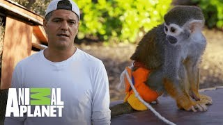 Frank denuncia industria que se beneficia con animales | Wild Frank en California | Animal Planet