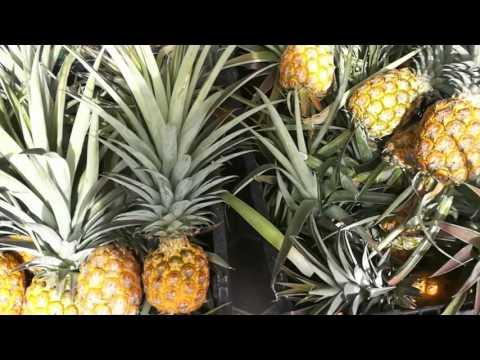 Affnan's Aquaponics - Pineapple Crown