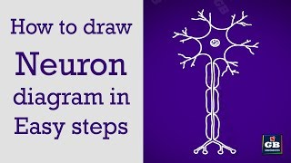 How to draw neuron in easy steps :Control&Coordination :10th Biology :CBSE : ncert class 10 :Science