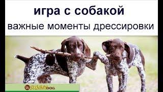 Игра  с собакой.  Важные моменты дрессировки курцхара