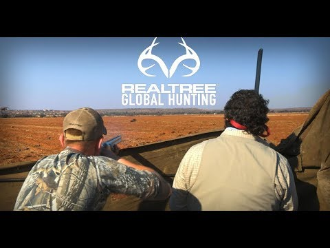 Pigeon Shooting in South Africa