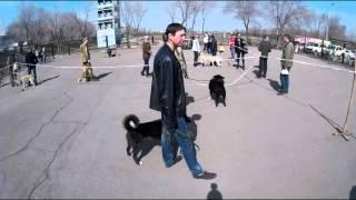 45-я Магнитогорская выставка собак охотничьих пород.