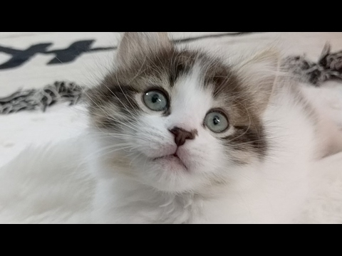 Close Up Kittens - 2017-04-26