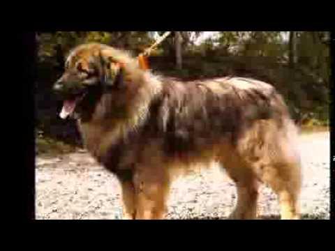 los perros prohibidos por paises