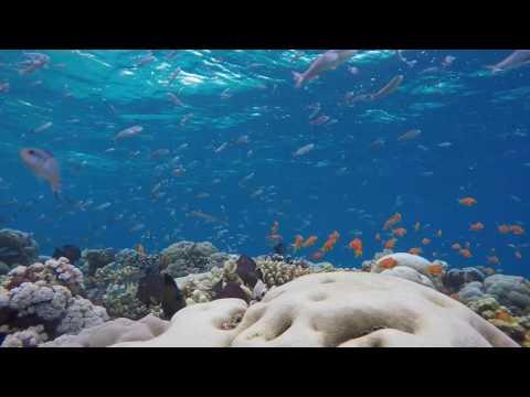 Snorkelling on Pemba Island