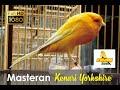 Ragam Audio Kenari Yorkshire Cocok Untuk Masteran  Mp3 - Mp4 Download