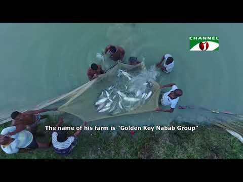 Fish farming revolution in Chanpainawabganj || Shykh Seraj || HD ||