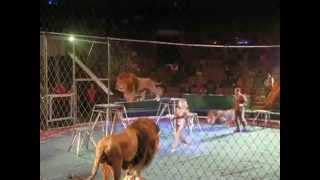 львы накинулись на дрессировщика в цирке