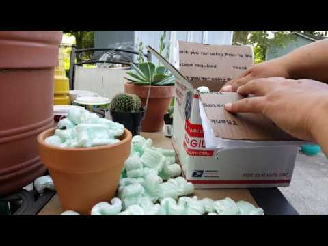 Unboxing Of succulents the 11th from The Succulent Source