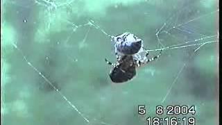 Herra Hämähäkki paketoinnin mestari