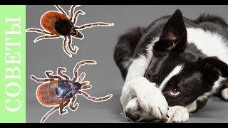 Они приходят весной или как защитить собаку от блох и клещей.