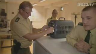 Katzenjagd im Polizeirevier - SPIEGEL TV thumbnail