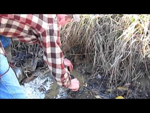 Iowa Trapping 2012 - Setting Traps