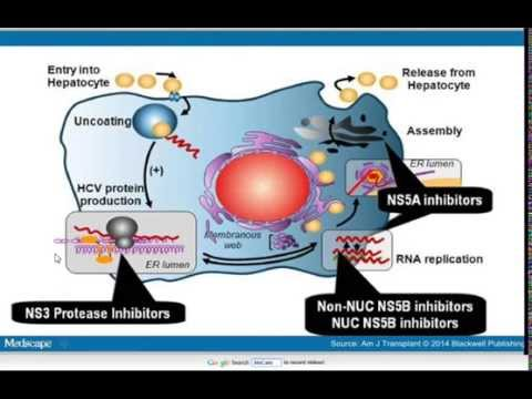 Mechanisms of action of the new drugs for chronic hepatitis C