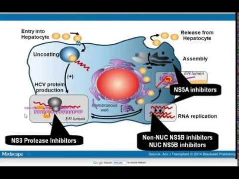 Mechanisms of action of the new drugs for chronic hepatitis C