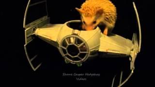 Hedgehog loves Star Wars!!!