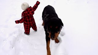Rottweiler and Baby playing in the snow   84