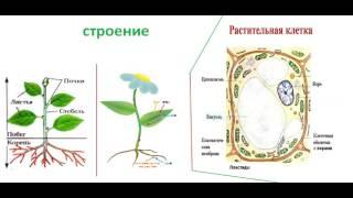 Ботаника -  как наука