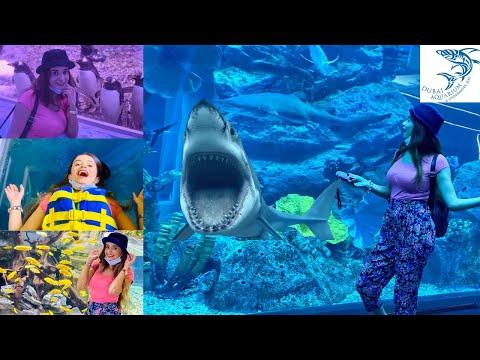 Dubai Mall Aquarium & Underwater Zoo Experience | Sharks, Fish Feeding, King Croc & Penguins